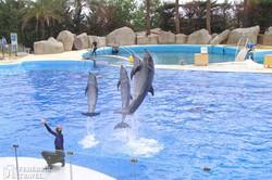 delfin show a Marinelandban