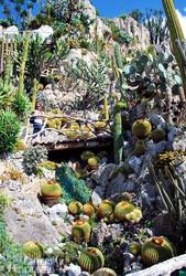 az Egzotikus Kert Monacóban – részlet