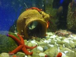 részlet a genovai akváriumból