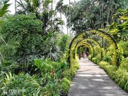 a szingapúri botanikus kert egzotikus növényvilága