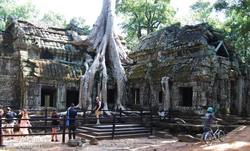 Ta Prohm, a fák gyökereivel átszőtt templomegyüttes