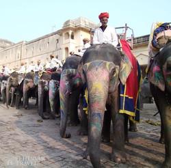 elefántok az Amber-erődpalotánál