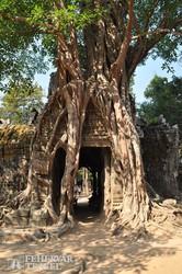 a természet és az emberi alkotás összefonódásának csodája Angkorban