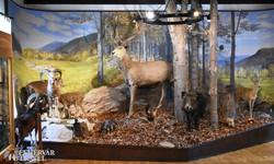 a szilvásváradi Erdészeti Múzeum (részlet)