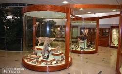 a Mátra Múzeum természettudományi kiállításának egy részlete