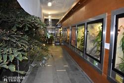 a Mátra Múzeum pálmaháza (részlet)