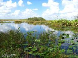részlet az Everglades Nemzeti Park mocsárvilágából