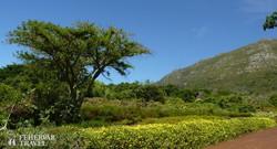 Kirstenbosch – Dél-Afrika legszebb botanikus kertje