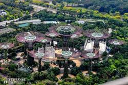 """Szingapúr: a """"Gardens by the Bay"""" színes óriásfái madártávlatból"""