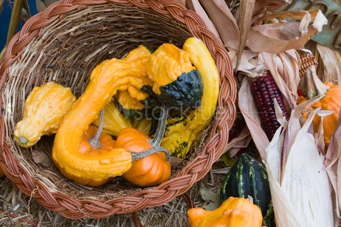 Holiday Gourds and Corn