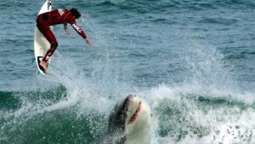 shark attack Australia drone