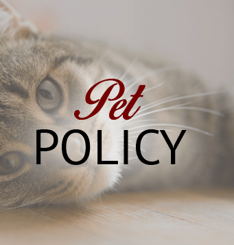 Our Amarillo apartments are pet friendly