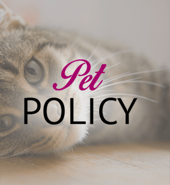 Information about our Pet Policy