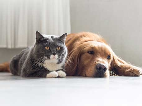 A dog and cat cuddle together at 422 At The Lake.