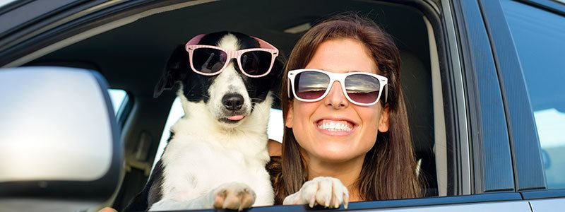Pet friendly apartments in Norwood MA