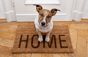 Pet Friendly in Park Towers Apartments in Richton Park, IL.