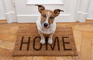 Pet friendly apartments for rent in Cheektowaga, NY