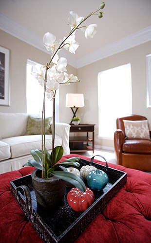 Orchids in a luxury apartment in the Ballantyne neighborhood of Charlotte, NC