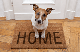 Pet friendly apartments in West Chester