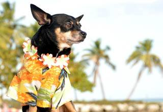 Pet friendly apartments in Delray Beach, FL