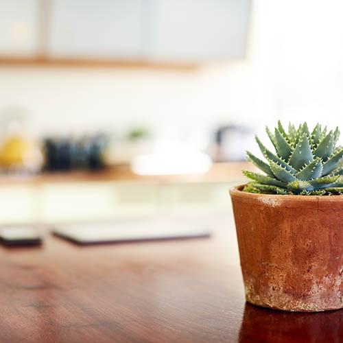 Plant on desk at 4000 Hulen Urban Apartment Homes