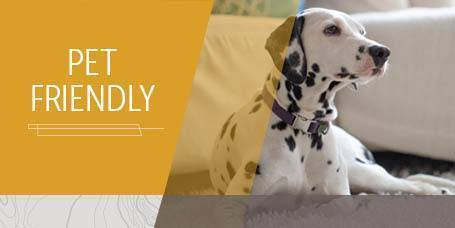Pet Friendly Apartments in Layton UT