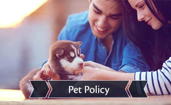 Pet friendly apartments for rent in Missoula, MT