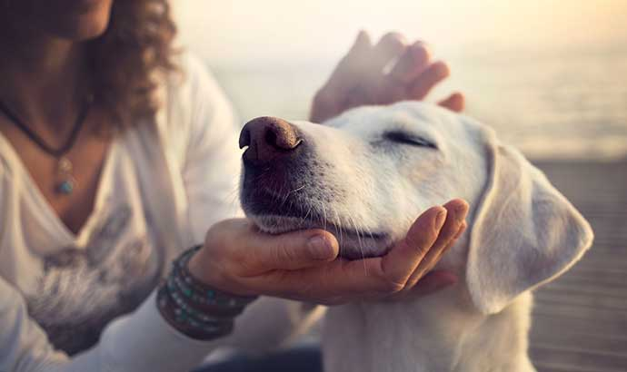 Victory North Apartments in League City is pet friendly!