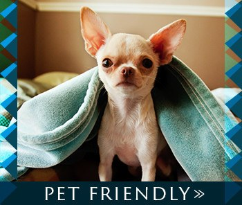 Presidio Apartments is pet friendly