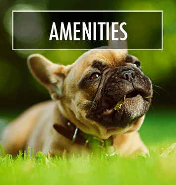 Learn about the wonderful pet-friendly amenities at our apartment community in NJ, Morris Plains