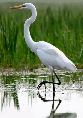 Enjoy the wetlands near Lux