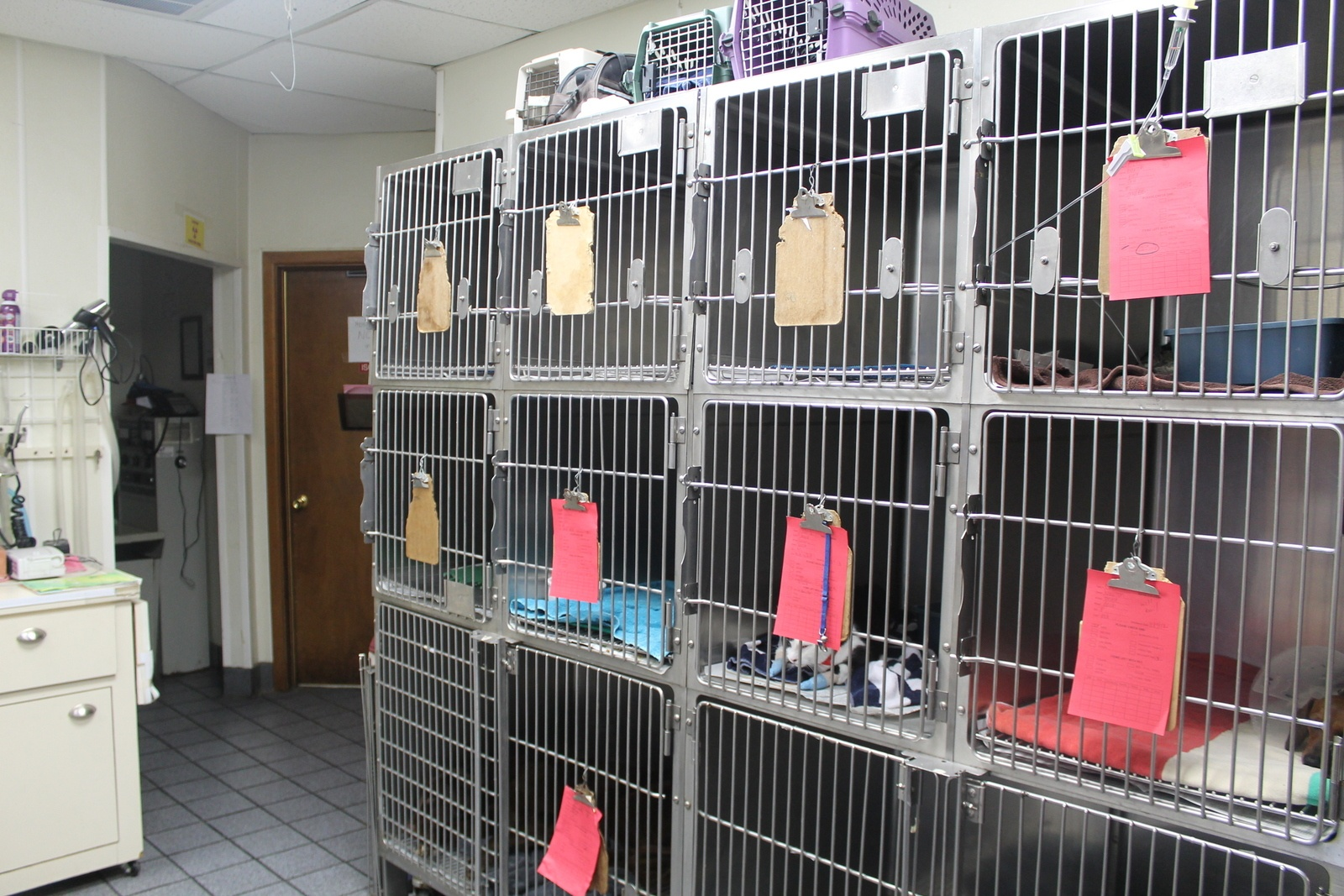 Our Hospital Animal Hospital of Lubbock