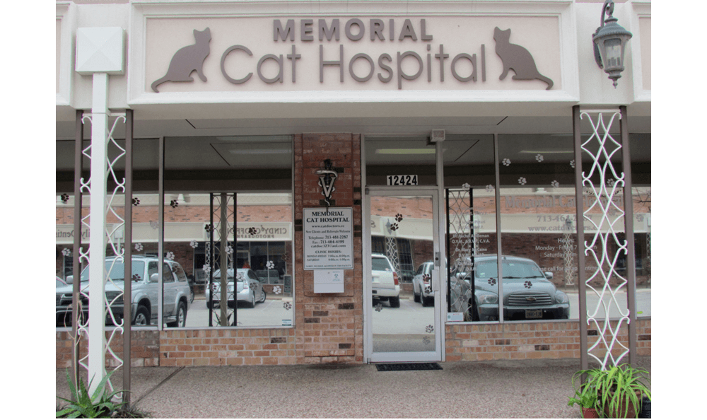 Close Exterior Cat Hospital