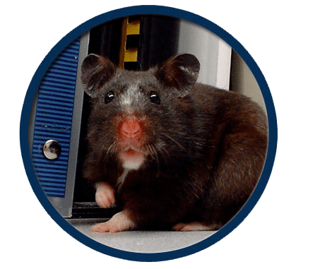 Mice and rats treated in Elmwood Park