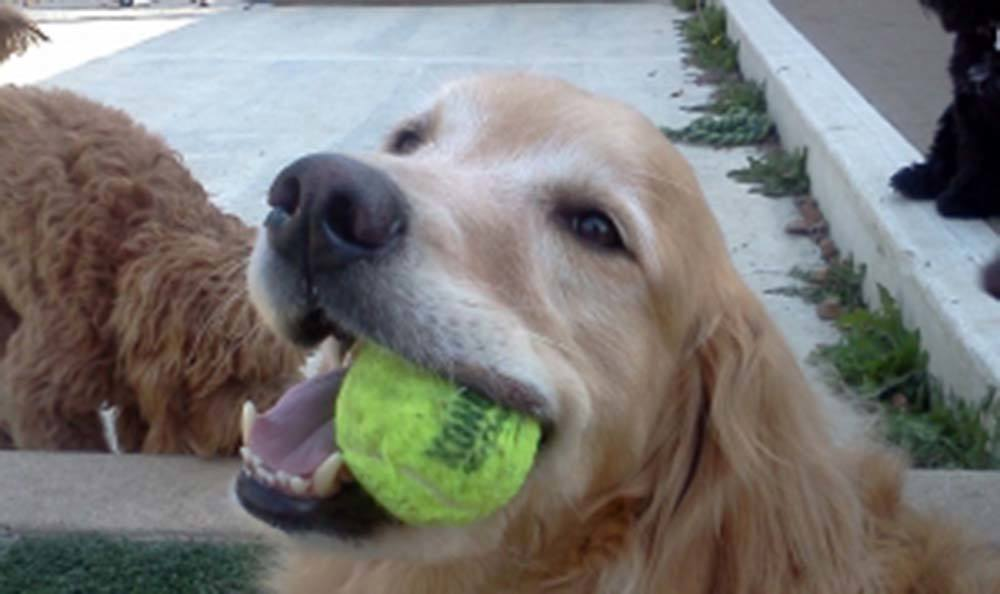 We love to play ball at Veterinary Group of Chesterfield!