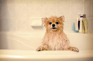 Animal Hospital bathing services in Austin