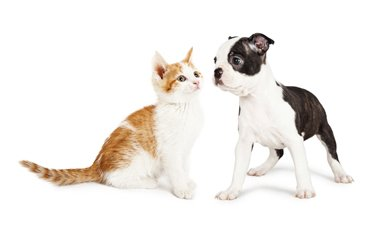 Animal hospital in Roswell are here to make your pets happy and healthy
