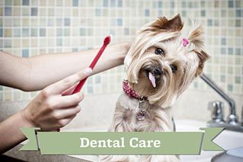 Pet dental care provided by Your Animal Hospital