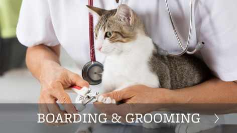 Boarding and grooming at our animal hospital in Torrance