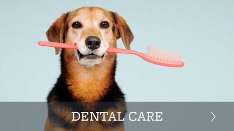 Pet dental care offered in Torrance
