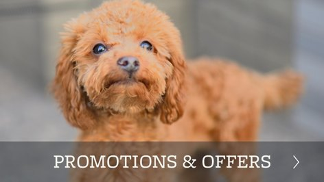 Promotions and offers in Odessa