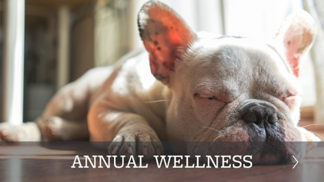 Animal Hospital wellness plans offered in Torrance