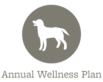 Animal Hospital wellness plans offered in Spring Lake