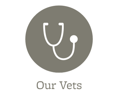Our animal hospital veterinarians in Dover