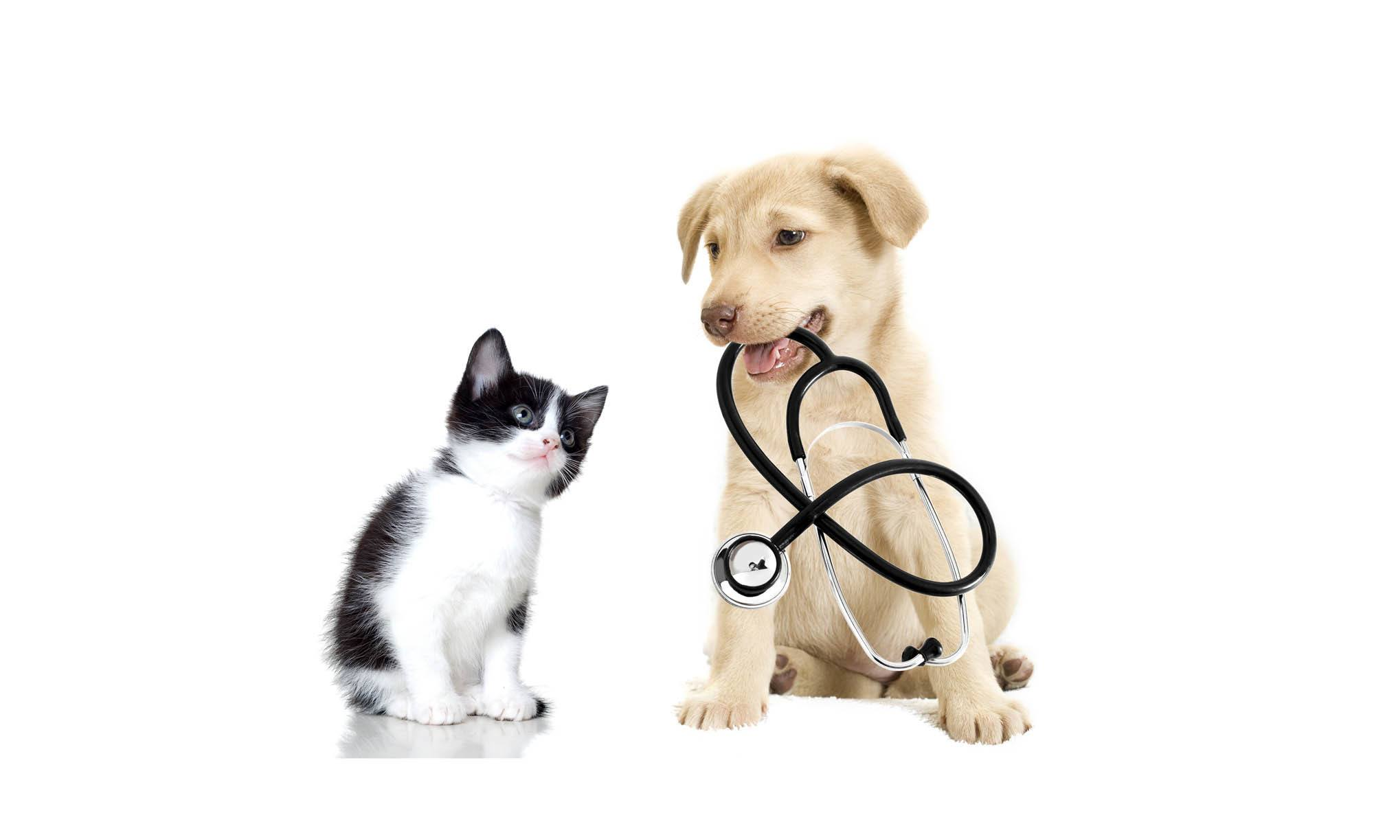 Animal hospital in Lake Havasu City, AZ