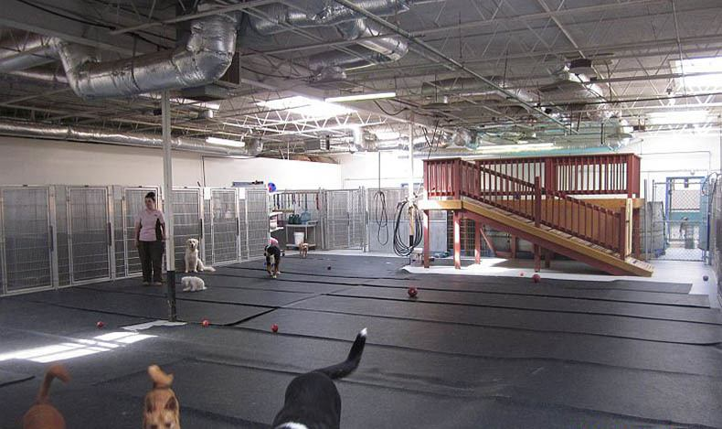 Dog play area at Animal Hospital in Virginia Beach