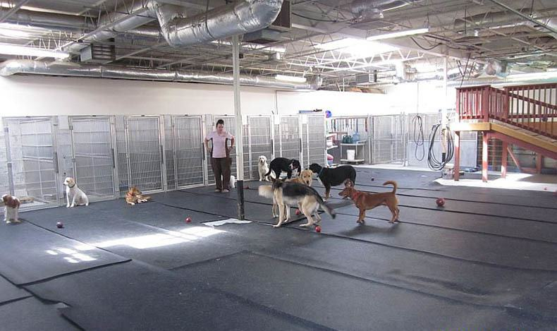 Doggy paddock at Virginia Beach Animal Hospital