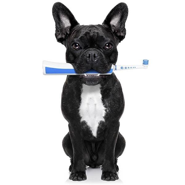 Pet dental care is important at Richmond Animal Hospital