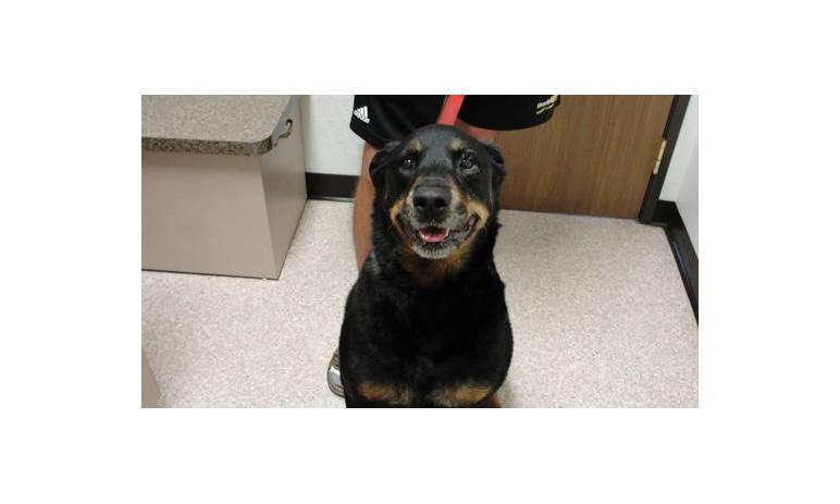 Dog Pet Pic at Mesa Animal Hospital