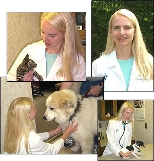 Dr. Andrea Harl at animal hospital in Tulsa